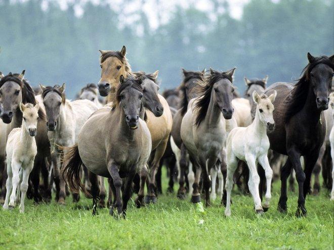 Horses running free